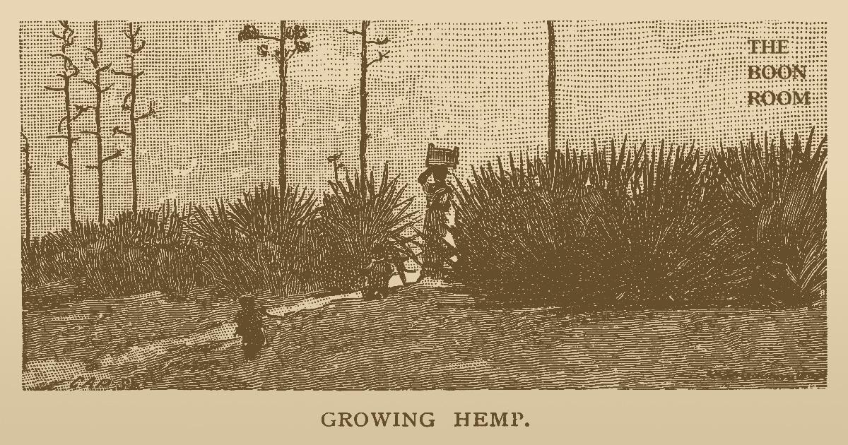 History of Hemp