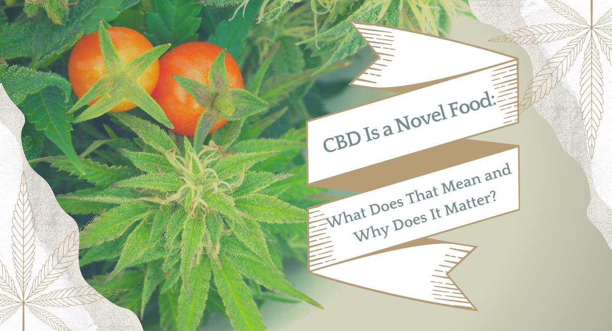 CBD Is a Novel Food