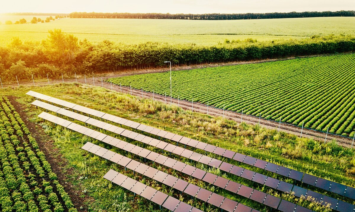 What Are Five Sustainable Agricultural Practices?