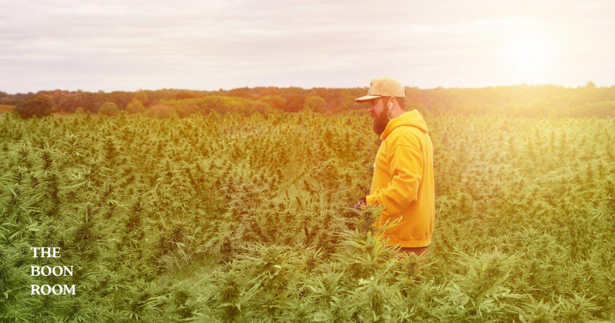 Industrial Hemp Vs. Marijuana